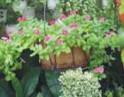 Cây sân vườn