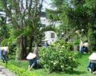 Chăm sóc công viên, vườn hoa, cây xanh