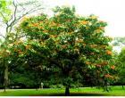 Cung cấp cây xanh