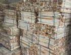 Nan gỗ keo xuất khẩu
