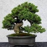 Công Ty TNHH Kiến Trúc Phong Cảnh Hoàng Hoa