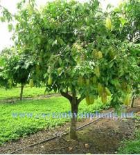 Cây ăn trái, cây ăn quả