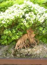 Cây bonsai, tiểu cảnh