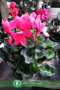 Cây hoa