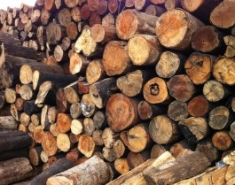 Chất đốt củi rừng