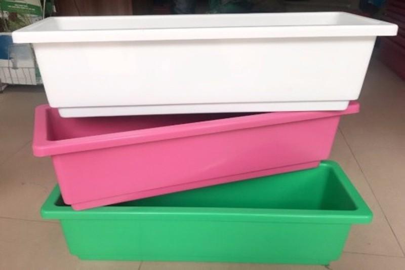 Khay Nhựa Trồng Rau Sạch