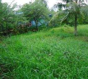Đất mặt tiền phường 3