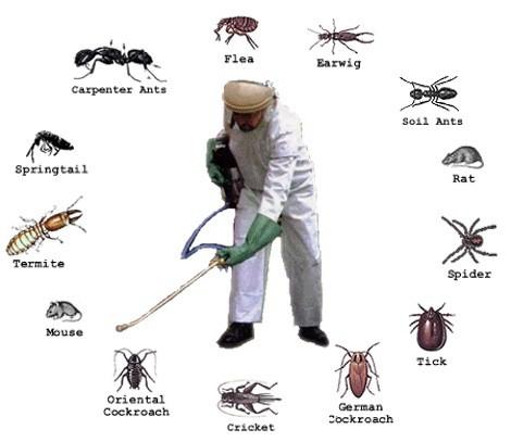 Xử lý côn trùng gây hại