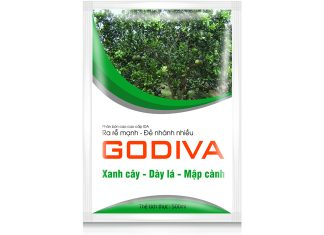Cây ăn trái Godiva
