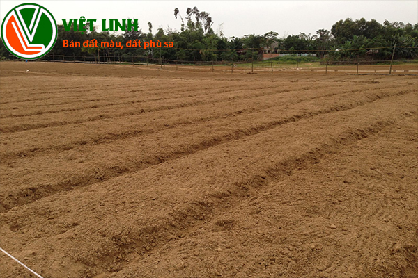 Bán đất phù sa tại Hà Nội