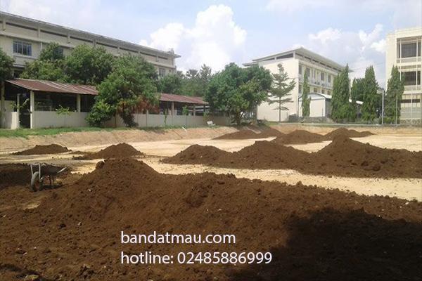 Bán đất trồng cây công trình