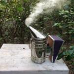 Bình xịt khói chống ong đốt