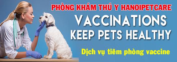 Dịch vụ tiêm phòng vaccine cho thú cưng