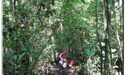 Khám phá rừng quốc gia Cát Tiên