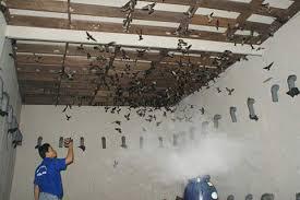 Tư vấn xây dựng nhà nuôi chim yến