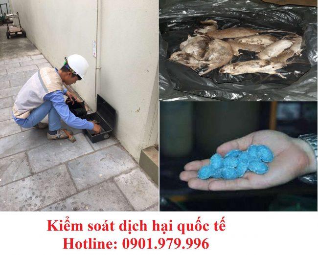 Dịch vụ diệt chuột hiệu quả