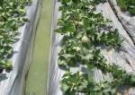 Màng nhựa nông nghiệp