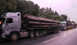 vận tải gỗ
