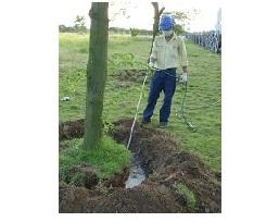Diệt và phòng chống mối cho cây trồng