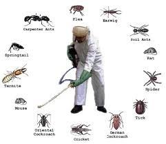 Diệt trừ các loài côn trùng gây hại