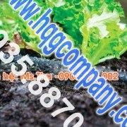 Hệ thống vườn rau lắp ghép
