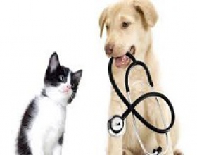 Điều trị thú y