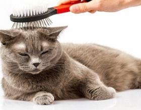 Grooming mèo