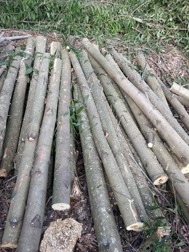 Cung cấp gỗ nguyên liệu