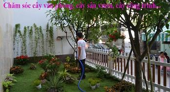 Dịch vụ chăm sóc cây cảnh
