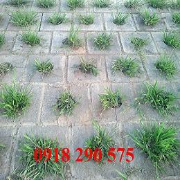 Gạch lát bờ kè hình vuông, lổ tròn trồng cỏ
