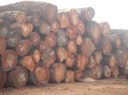 Gỗ Cameroon