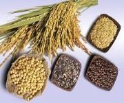 Hạt ngũ cốc