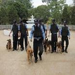 Huấn luyện cùng chó nghiệp vụ