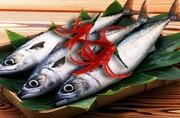 Hương Cá Saba (Saba Fish )