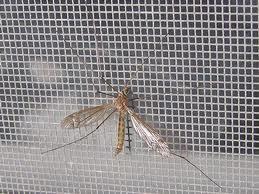 Lưới chống muỗi