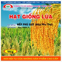 Nếp Phú Quý