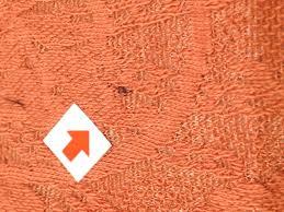 Sửa lỗi vải