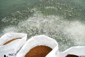 Thức ăn nuôi thủy sản