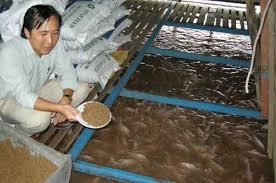 Thức ăn nuôi trồng thủy sản