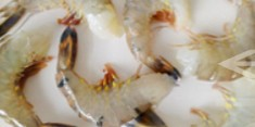 Thuỷ hải sản