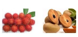 Trái cây ba miền